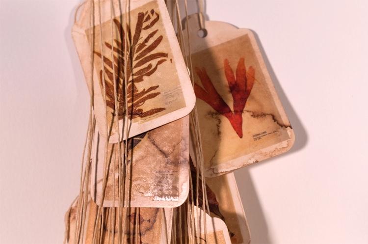 b-stirratt-herbarium-record-3-1